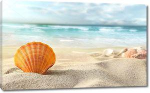 Раковина на песчаном пляже