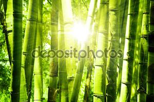 Азиатский бамбуковый лес