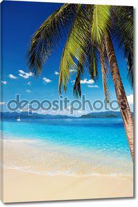 Тропический пляж с пальмами и лазурные воды