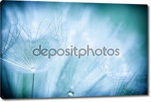 Фон цветок одуванчика