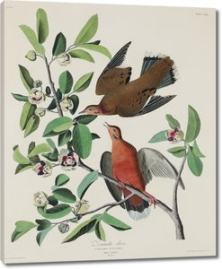 Певчие птицы на ветке