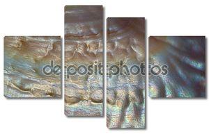 Макро фотографии текстуры раковины Средиземного моря