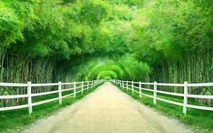 Дорожка через бамбуковый лес
