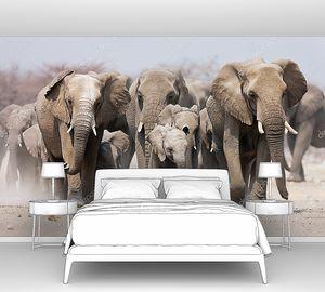 Стадо слонов в пыли