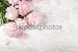 Красивые пионы на белом фоне