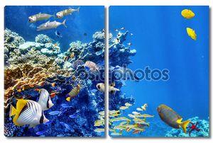 Прекрасный подводный мир