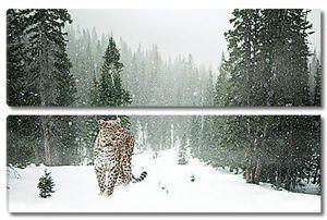 Леопард в зимнем лесу