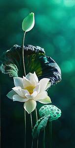 Белый цветок лотоса на зеленом фоне