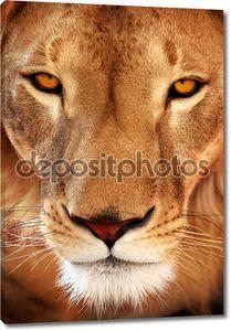 Заделывают Льва