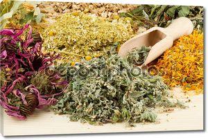 Лечебные травы на деревянный стол, фитотерапия
