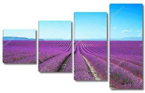Лаванда цветок цветущие поля бесконечные ряды. Валансоль Прованс