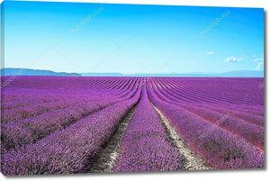 Цветущие бесконечные поля