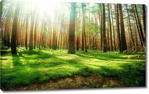 Освещенная поляна в лесу