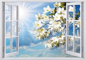 Прекрасные белые цветы в окне