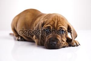 молодая собака