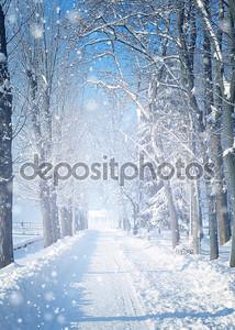 красивый зимний пейзаж со снегом покрыты деревья