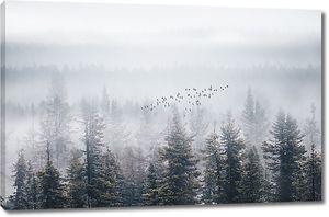 Туман окутал лес