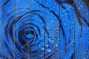 Голубая роза с капельками