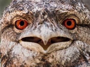 Голова совы