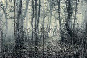 След через таинственный темный лес