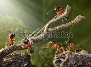 Команда муравьев, разрушении ржавые дерево