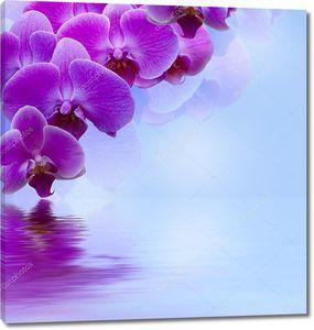 Сиреневая орхидея над водой