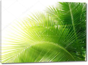 Листья пальм в правом углу
