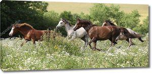 Партия коней бежит в цветущем сцены