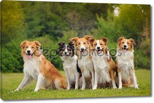 Группа пяти счастлива собаки бордер колли