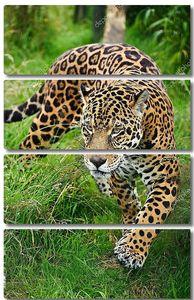 Ягуар в высокой траве