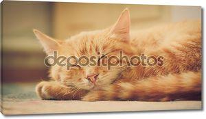 Маленький Рыжий котенок, спал на кровати
