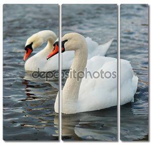 белые лебеди.