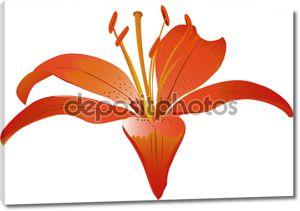 Красные лилии цветок