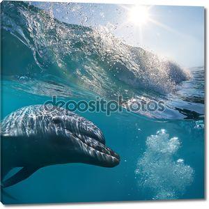 небольшая толпа дельфинов.