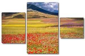 Цветущих полей в Сибиллини горы