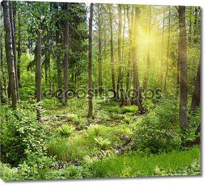 Солнца лучи литься через деревья в лесу