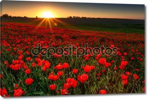 Закат над полем с красными маками