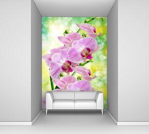 Орхидея розовая на зеленом фоне