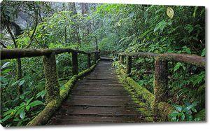 Мостки в тропическом лесу