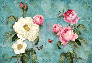 Розы на фоне  отражений
