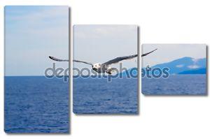 Чайка полет над морем