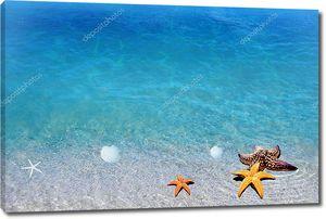 Берег моря, морские звезды