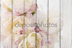 Гладкий белый пион цветы на белом фоне