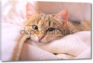 Смешные глядя кошки лицо крупным планом