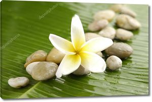 Белый цветок на банановом листе