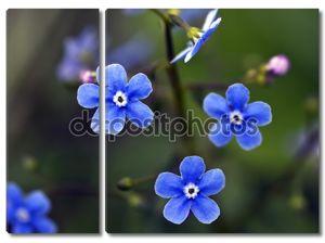 Цветок голубой Незабудка макроса