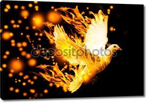 летать голубь в огне