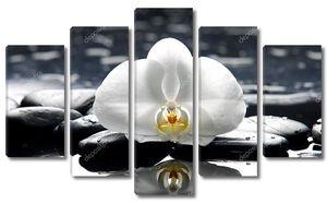 Белая  орхидея на влажных камнях