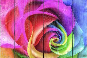 радужная роза крупным планом