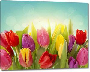 Цветы тюльпана на голубом фоне